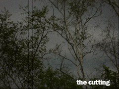 The Cutting – Video Installation